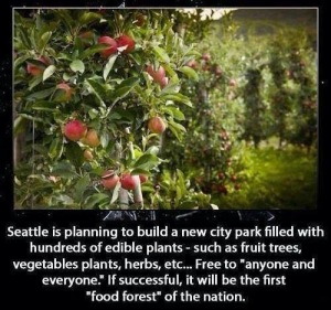 Seattle Food Forest